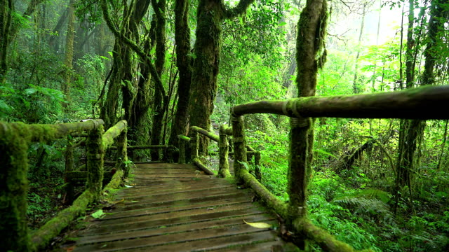 4K: Wood bridge in the natural rain forest. video
