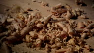 Woodchips (shavings) drops on wooden surface video