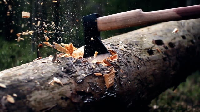 Woodcutter cuts the tree with an ax, the chips are flying video