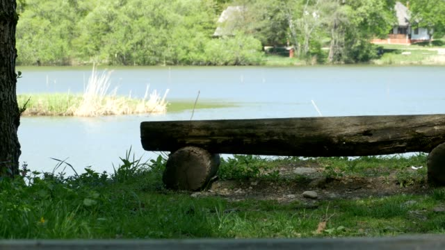 Wooden Bench near the Lake video
