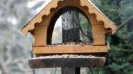 wooden bird feeder house in winter time video