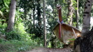 wooden boat in the forest video