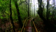 wooden bridge with moss in natural park under rain video