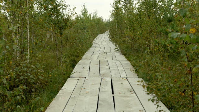 Wooden ecotrail in the national park reserve. Autumn daytime. Smooth dolly shot. video