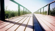 Wooden pier with reed. Dolly shot. Close up video