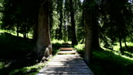 Wooden plank road in forest video