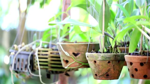 HD PANNING: Wooden Planter video