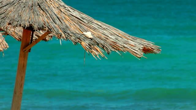 Wooden umbrella on empty beach video