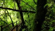 wooden walkway through in deep rainforest,dolly shot video