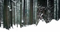 Woodland In Deep Of Winter With Snow Falling video