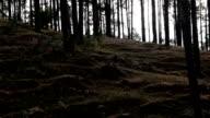 Woodland video