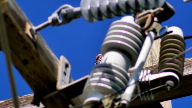 Woodpecker on top of power line pole video