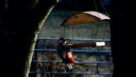 woodpecker video