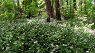Woods video