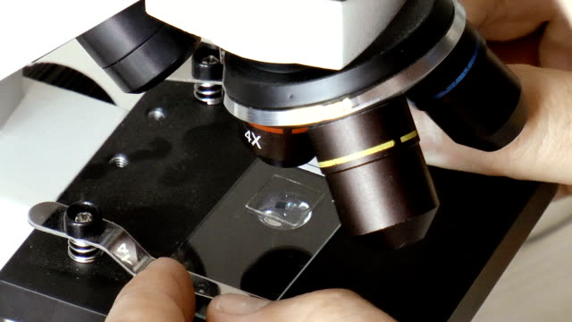 Work with a microscope video
