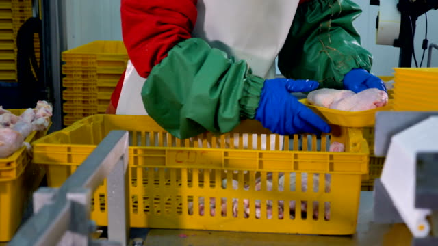 A worker arranges individual trays with two raw chicken legs. video
