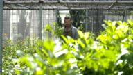 Worker At Garden Center; HD: Photo JPEG, dolly. video