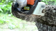 Worker man hands with gloves sawing thick maple tree trunk with chainsaw. video