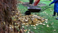 worker man in jacket load rusty barrow with autumn leaves compost material. video