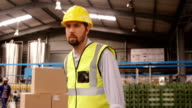 Worker pushing trolley of cardboard boxes video