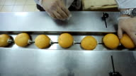 A worker puts freshly baked rolls on conveyor for packaging video