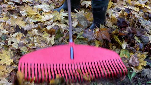 worker raking leaves from piece of ground with red plastic rake tool. FullHD video