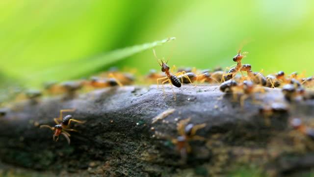 Worker termites video