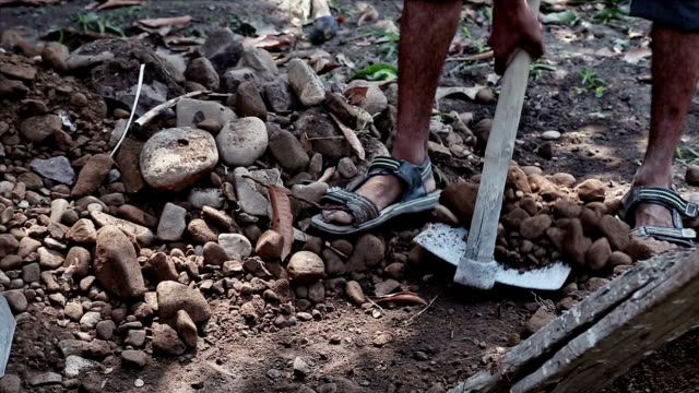 worker using spade for removing small stones from fields. video