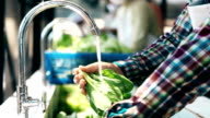 Worker Washing Fresh Organic Vegetable video