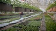 Worker watering flowers in 4K video