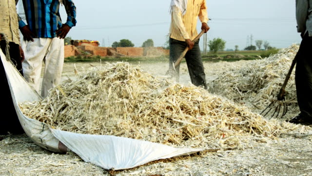 Workers collecting Sugarcane husk video