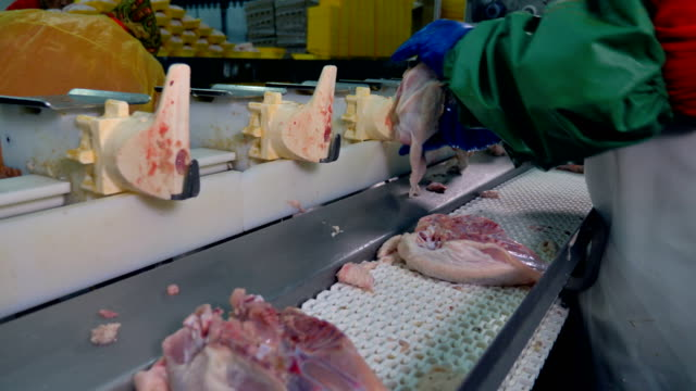 Workers install chicken torsos on plastic conveyor stands. video