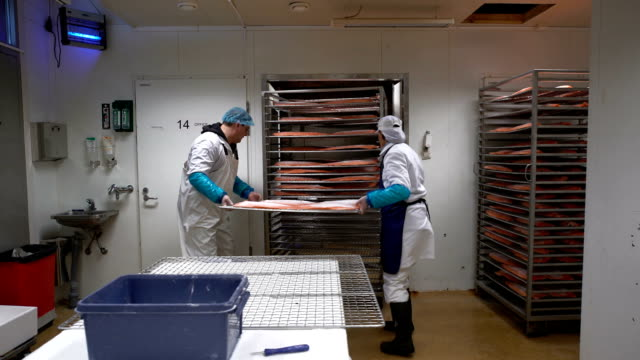 A workers put salmon fillets into the oven for smoking fish in the factory video