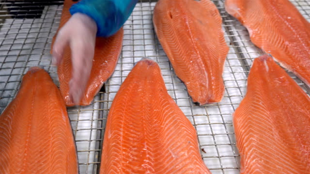 Workers put the pieces of salmon fillet on a table for salting. Dolly shot video