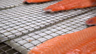 Workers put the pieces of salmon fillet on a table for salting video