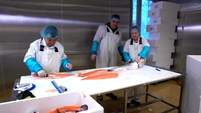 Workers slicing a fillet of salmon at table on the fish factory. Dolly shot video