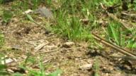 Working ants video