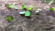 HD: Working ants video