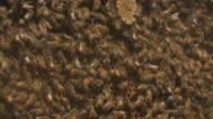 HD: Working Hard: Beehive video