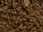 Working Hard: Beehive video