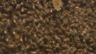 HD: Working Hard: Fast Beehive Action video