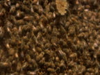 Working Hard: Fast Beehive Action video