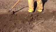 working in spring  garden with raker tool video