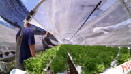 working in the hydroponics farm video