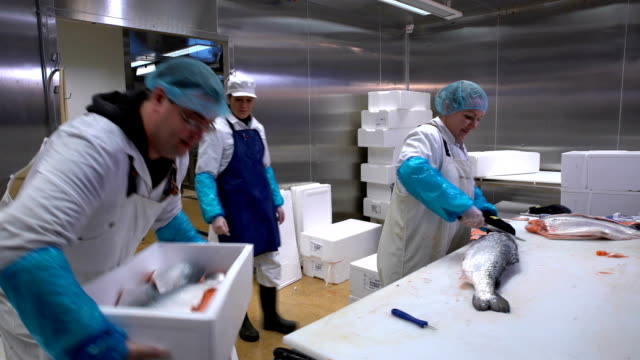 Working Team In A Seafood Processing Factory. Man sprinkles spices on the fish video