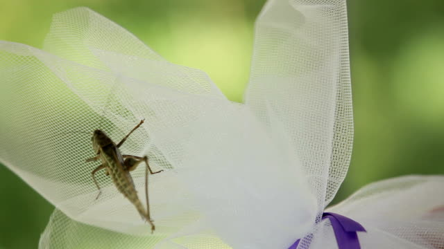 Wounded locust video