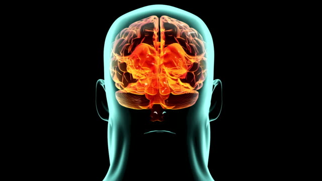 X-ray 360 degree brain inside body. Medical video background. video