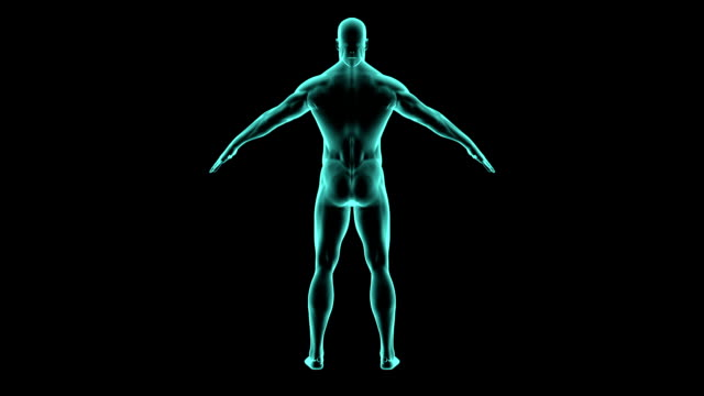 X-ray 360 degree human body. Medical video background. video