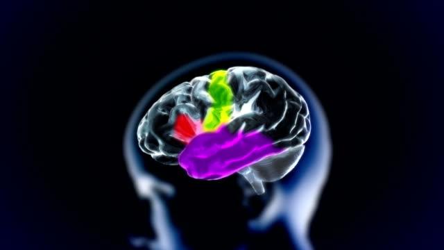 xray brain 3d rendering video