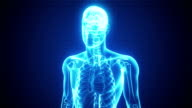 X-ray of Human Body | Loopable video